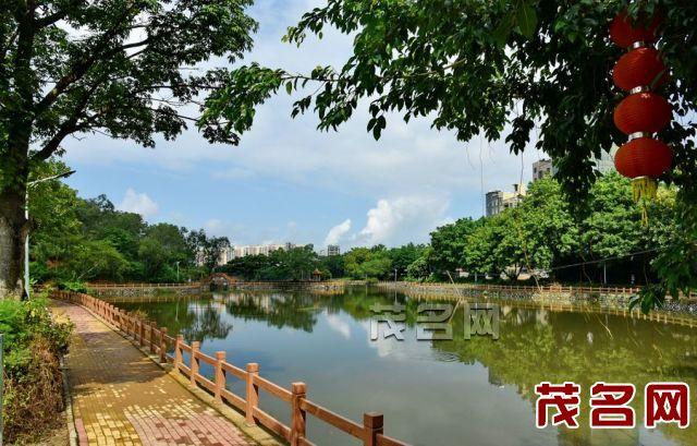广东茂名森林公园的龟