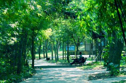 广东茂名森林公园图片